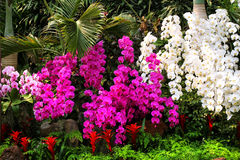 De schitterende purpere en witte orchideeën versieren park Stock Fotografie