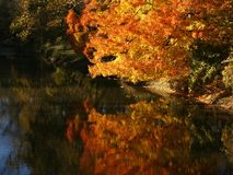 De schittering van de herfst royalty-vrije stock afbeeldingen