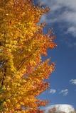 De Schittering van de herfst Stock Foto