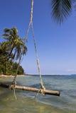De schommeling die op de kokospalm hangt Royalty-vrije Stock Afbeeldingen