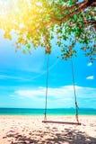 De schommeling hangt van kokospalm over strand Stock Afbeeldingen