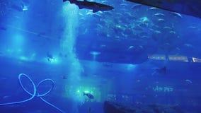 De school van vissen beweegt zich in oceanarium rond een geworpen platform met bezoekersmensen stock video