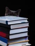 De schoolboeken op bureau, onderwijsconcept, leiden, technologie, kat, plons op Stock Foto's