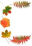 De Schoonheden van de herfst stock foto
