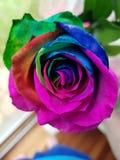 De schoonheid is kleurrijk stock fotografie