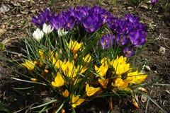 De schoonheid van aard en de lente tuinieren Stock Foto's