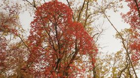 De Schoonheid van Autumn Forest bij Zonsondergangdag stock video
