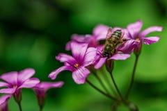 De schoonheid van de bloem royalty-vrije stock afbeeldingen