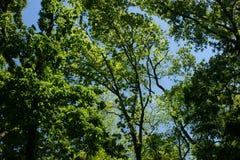 De schoonheid van bomen Royalty-vrije Stock Foto