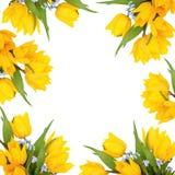De Schoonheid van de Bloem van de lente Stock Fotografie