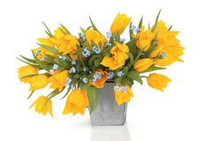 De Schoonheid van de Bloem van de lente stock afbeeldingen