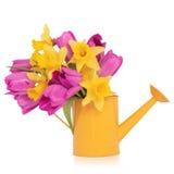 De Schoonheid van de Bloem van de lente stock afbeelding