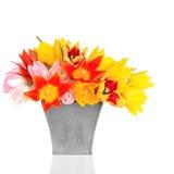 De Schoonheid van de Bloem van de tulp Stock Afbeeldingen