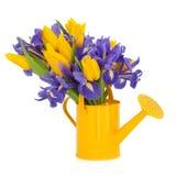 De Schoonheid van de Bloem van de tulp en van de Iris stock afbeelding