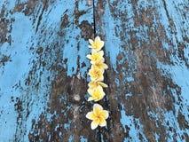 De schoonheid van de bloemaard Royalty-vrije Stock Foto