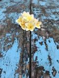 De schoonheid van de bloemaard Stock Foto
