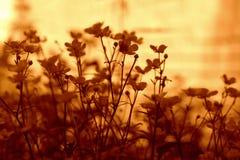 De schoonheid van de bloemenaard Royalty-vrije Stock Fotografie