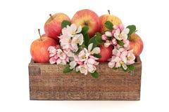 De Schoonheid van de Bloesem van de Bloem van de appel Stock Foto's