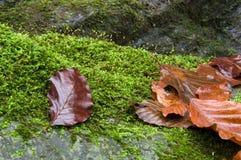 De schoonheid van de herfst royalty-vrije stock foto's