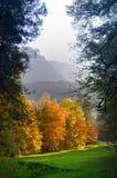 De schoonheid van de herfst Het portret van het aantrekkelijke naaktheidvrouw behandelen door esdoorn doorbladert Stock Foto