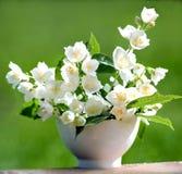 De schoonheid van de jasmijn Stock Foto