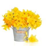 De Schoonheid van de lente Royalty-vrije Stock Afbeelding
