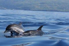 De Schoonheid van de oceaan Stock Foto