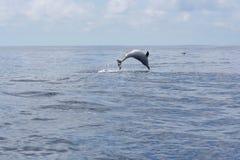 De Schoonheid van de oceaan Stock Foto's