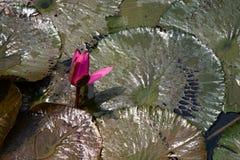 De schoonheid van de vijver Stock Foto's