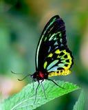 De schoonheid van de vlinder stock foto's