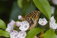 De Schoonheid van de vlinder Stock Fotografie