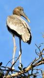 De schoonheid van de vogel Royalty-vrije Stock Foto's