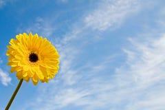 De schoonheid van de zomer met madeliefje Stock Foto
