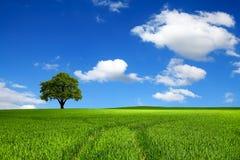 De schoonheid van ecologie Stock Fotografie