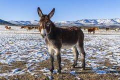 De schoonheid van ezels stock afbeeldingen