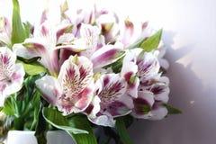 de schoonheid van het de bloemenclose-up van boeketalstroemeria Stock Fotografie