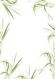De Schoonheid van het Gras van het bamboe Stock Afbeeldingen