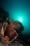 De schoonheid van het koraalrif Stock Foto's