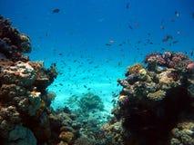 De schoonheid van het rode overzees - mooie heldere vissen, koraal, turkoois water stock afbeelding