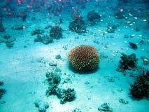 De schoonheid van het rode overzees - mooie heldere vissen, koraal, turkoois water stock foto's