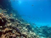 De schoonheid van het rode overzees - mooie heldere vissen, koraal, turkoois water stock fotografie