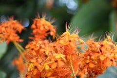 De schoonheid van kleine dingen riep bloemen Stock Afbeelding