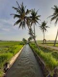 de schoonheid van de ochtendmening met kokospalmen, groene rijstinstallaties en het glanzen helder zonlicht royalty-vrije stock fotografie