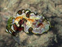 De schoonheid van onderwaterwereld stock afbeeldingen