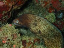 De schoonheid van onderwaterwereld in Sabah, Borneo royalty-vrije stock afbeelding