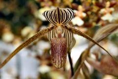 De schoonheid van orchideeën Stock Foto