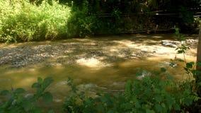 De schoonheid van de Paniki-rivier die in het regenachtige seizoen stroomt stock videobeelden