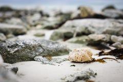 De schoonheid zal op het strand Stock Foto