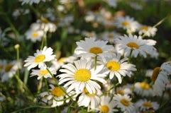 De schoonheidsbloemen Stock Foto's