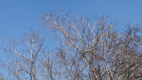 De schoonheidsscence van boomnarture Royalty-vrije Stock Foto